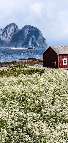 Summer view to Vaeroy island, Lofoten, Noruega Lofoten, Places Around The World, Travel Around The World, Around The Worlds, Beautiful Norway, Beautiful World, Places To Travel, Places To See, Wonderful Places