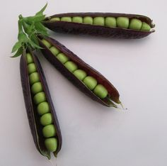 About Seeds: no we don't have any GMO seeds, all this purple vegetable seeds are actually heirloom!