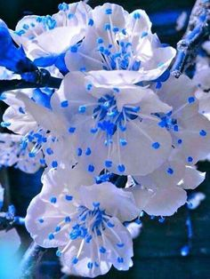 white and blue flowers Unusual Flowers, Rare Flowers, Amazing Flowers, Beautiful Roses, Pretty Flowers, Beautiful Gardens, White Flowers, Pretty Flower Pictures, Orquideas Cymbidium