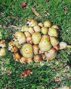 Deep Dream Fungi by KLMjr. #deepdream #fungi #fungusamongus #shrooms #mushrooms #digitalart  #digitalmanipulation by kendrofious_morificus