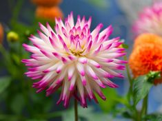 flowering bulbs - Google Search