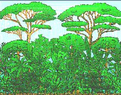 Rainforest layers, the rainforest layers - Funny Pictures Rainforest Facts, Rainforest Trees, Daintree Rainforest, Rainforest Animals, 1 Gif, Weird Pictures, Continents, Picture Video, Landscape Photography