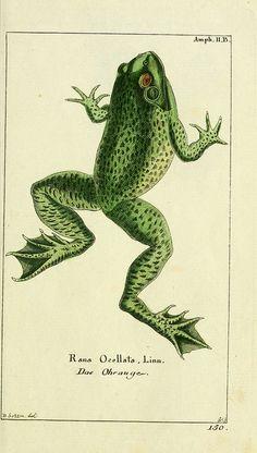 n18_w1150 | Flickr - Photo Sharing!  http://stores.ebay.com/SANDTIQUE-Rare-Prints