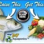 Aquaponics Fish to Plant Ratio