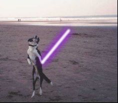 Animals with lightsabers! Star Wars, Stars, Dogs, Animals, Animais, Animales, Animaux, Starwars, Pet Dogs