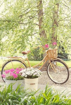 Flowers with bike...