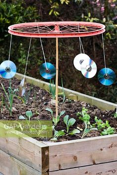 GAP Gardens - Home made bird scarer made from old CDs and bicycle wheel - Image No: 0171642 - Photo by BBC Magazines Ltd Allotment Gardening, Gardening Tips, Diy Garden Projects, Garden Crafts, Scarecrows For Garden, Recycled Garden Art, Recycled Glass, Outdoor Crafts, Garden Pests