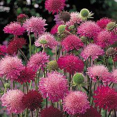 Plants Delivered, Patio Planters, May Weddings, Hardy Perennials, Garden Borders, Garden Soil, Flower Farm, Back Gardens, Flower Seeds
