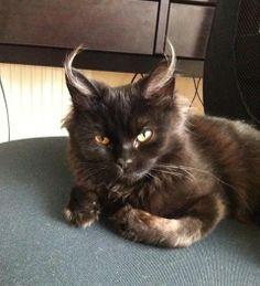 """I'm pretty sure that my kitten is the devil.."