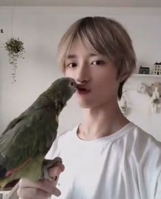 Beomgyu with Toto 6 jae wallpaper Beomgyu's parrot Toto 🦜 ❤️ Got7, Yugyeom, K Pop, Nct 127, Kpop Gifs, Lucas Nct, Oui Oui, Lee Know, Funny Animal Videos