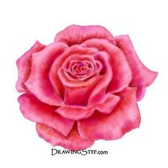 learn to draw a rose
