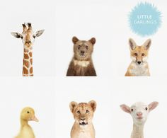 baby animal portraits by sharon montrose