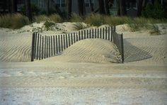 beach sand dunes - Google Search