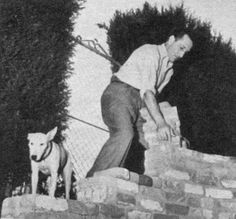 Basil Rathbone and his white bull terrier, Judy.