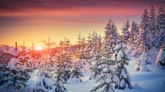 East Urban Home Winter Snowy Landscape at Gloomy Sunrise Light in Mountain Forest Serene Photo Shower Curtain Set Size: H x W Sunset Wallpaper, Photo Wallpaper, Nature Wallpaper, Of Wallpaper, Forest Wallpaper, Wallpaper Paste, Normal Wallpaper, Snow Covered Trees, Winter Sunset