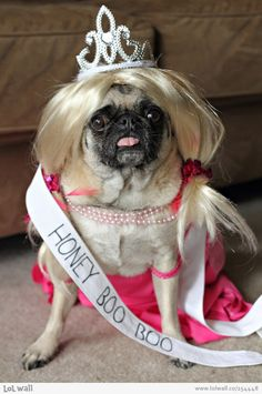 Pug in a wig as Honey Boo Boo! -- courtesy of www.canoodlepets.com