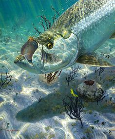 Freshwater fishing can be a great experience. Find out more about freshwater fishing including useful tips and how to stay safe when you are on the water. Salt Water Fish, Salt And Water, Bass Fishing Pictures, Underwater Art, Underwater Photography, Dragon Fish, Fish Wallpaper, Ocean Creatures, Fish Art
