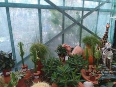 Kulla v Bratislava, Bratislavský kraj Bratislava, Four Square, Garden, Plants, Garten, Gardening, Plant, Outdoor, Gardens