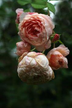 William Morris...just gorgeous!