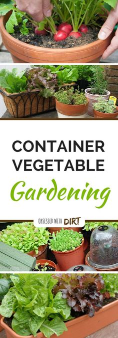 Container vegetable gardens can have higher yields than your average vegetable garden. That�s because the soil is warms up faster aboveground. Find out more...