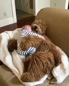 A cozy cuddle on another dreary day 🙃☁️ Westport, Connecticut. Cute Little Animals, Cute Funny Animals, Funny Cute, Cute Animal Videos, Funny Animal Pictures, Cute Puppies, Cute Dogs, Animals Beautiful, Animals And Pets
