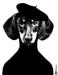 Image result for dachshund crowned