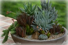 Another nice succulent arrangement by the The Succulent Perch