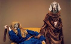 william wegman dogs sports - Google Search