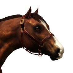 A Western show halter for your western horses. Comes with a fancy buckle and metal decorations. Now available for foals! 2 channels: leather and metal package-file format, zipped My Sims, Sims Cc, Sims Pets, Sims 3 Mods, Dutch Warmblood, Horse Games, Westerns, Horses, File Format