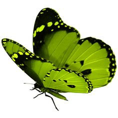butterfly ❤ liked on Polyvore featuring butterflies, animals, backgrounds, fillers and green