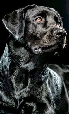 Black lab                                                                                                                                                                                 Mais #OilPaintingDog