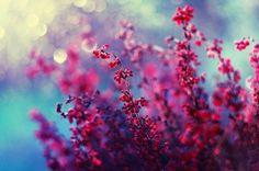 #цветочки