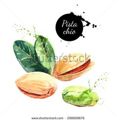 Hand drawn watercolor painting nut on white background. Vector trace illustration of pistachios - stock vector