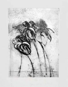 Jim Dine - Anthurium, from Temple of Flora, etching, drypoint, photo-gravure with watercolor Plant Drawing, Painting & Drawing, Jim Dine, Charcoal Art, Drawing Projects, Botanical Art, Printmaking, Screen Printing, Pop Art