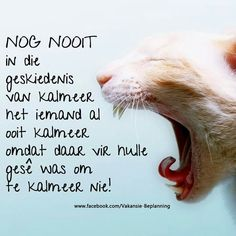 Afrikaanse Quotes, Funny Quotes, Life Quotes, How To Memorize Things, Jokes, Humor, Sayings, South Africa, Tart