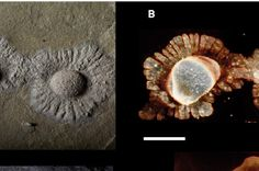 Oldest Multicellular Life Revealed In Detail | IFLScience