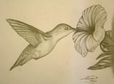 Ruby Throated Hummingbird -looks so amazing, I have to draw it!