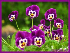 """Képtalálat a következőre: """"névnapi virág lila"""""""