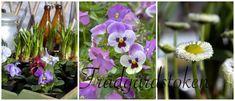 Trädgårdstoken Garden Ornaments, Plants, Yard Ornaments, Plant, Planting, Planets
