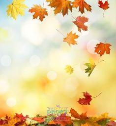Falling Autumn Leaves #DropzBackdropsAustralia #backdrops #backdropsaustralia #photography #cakedrop #scenicbackdrop #cakedrops #vinylbackdrop #photobackground #photographybackdrop #photobackdrop #studiobackdrop #scenicbackground