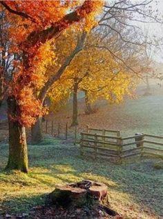 Autumn mist*