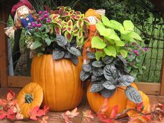I thought of this for indoor bouquets...can't believe I never thought of using them outdoors...pots for Mums & Asters, etc in the Fall...how cool!