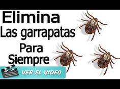 LIMON Y CANELA UN PODEROSO REMEDIO QUE DEBES CONOCER - YouTube