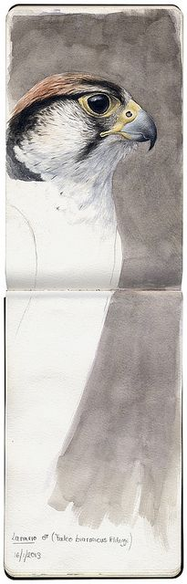 Marco Preziosi | #drawing #sketchbook