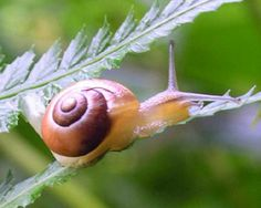 Great facts about snails from snail world .com