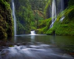 Springtime in the gorge... | Deep in the Columbia River Gorg… | Flickr