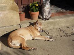 Pet sitter needed for labrador, pretty mongrel, tabby cat and chickens  House Sitter Needed  Gers, Marciac   midi-pyrenees,south west France  Mar 31,2014 For 10 days | Short Term Not a member? Join today to contact homeowner EnjoySWFrance We live in an 18th C farmhouse with a large garden and need a house sitter to care for our healthy, well-behaved pets for 10 days. The dogs need to be walked twice daily, the cat needs stroking and the chickens have to