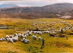 Community - Uist Wool