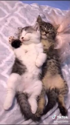 Super Cute Kittens, Baby Animals Super Cute, Cute Baby Dogs, Funny Cute Cats, Cute Little Animals, Cute Cats And Kittens, Cute Funny Animals, Baby Cats, Kittens Cutest Baby