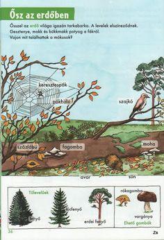 Kis tudósok szókincstára - Évszakok - Kiss Virág - Picasa Webalbumok Environmental Studies, Nature Study, Autumn Activities, Fall Halloween, Kids Learning, Kindergarten, Homeschool, Clip Art, Science